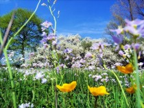 Descubrir la Primavera con los niños