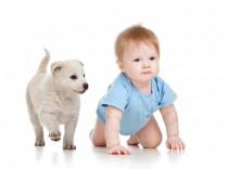 ¿En qué consiste la terapia infantil con animales?