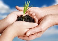 en manos crece planta