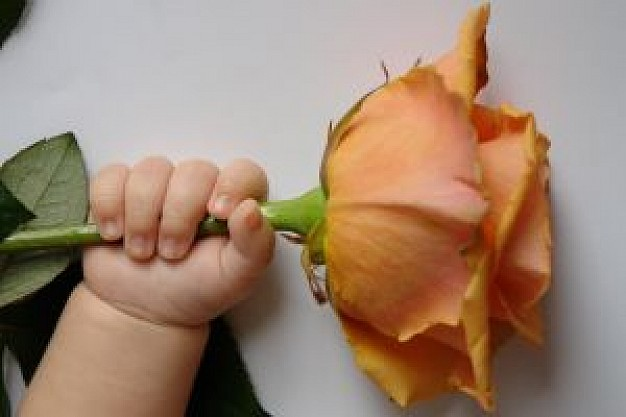Manualidad para hacer rosas con bolitas de papel